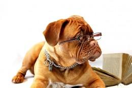 6 powodów, przez które psy pomagają w leczeniu depresji