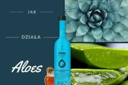 Aloes – czy wiesz wszystko o jego właściwościach?