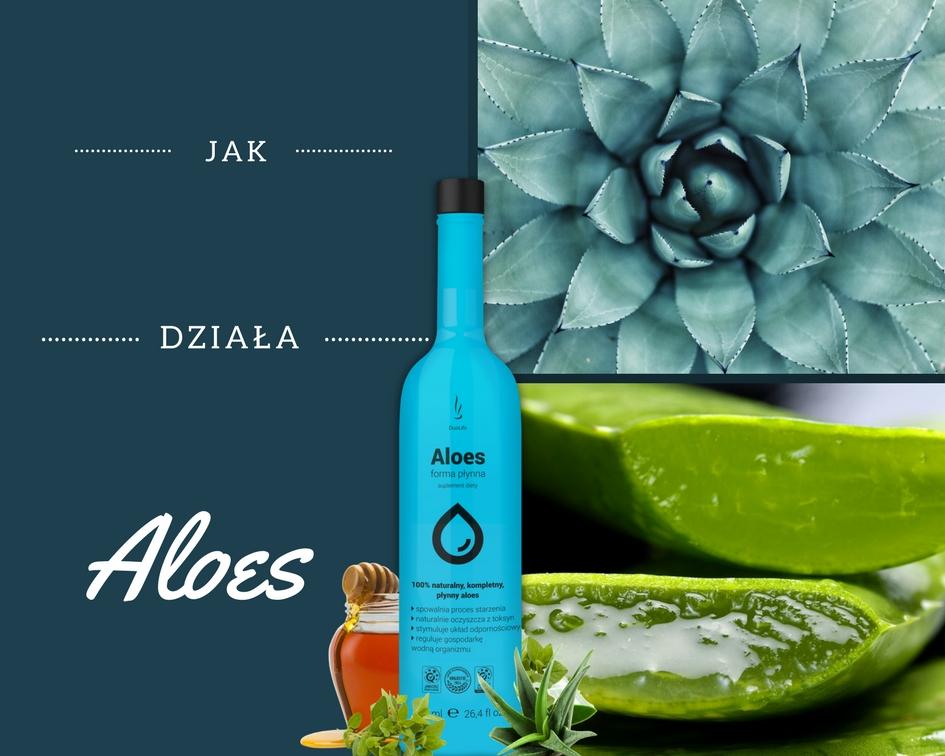 Aloes - czy wiesz wszystko o jego właściwościach?