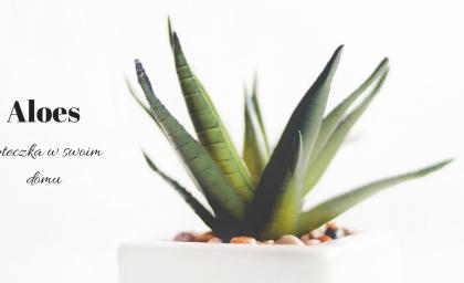 Aloes w doniczce, dlaczego warto go mieć?