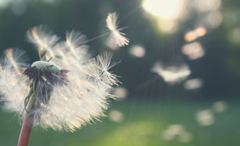 Jak sobie radzić z alergią na pyłki?